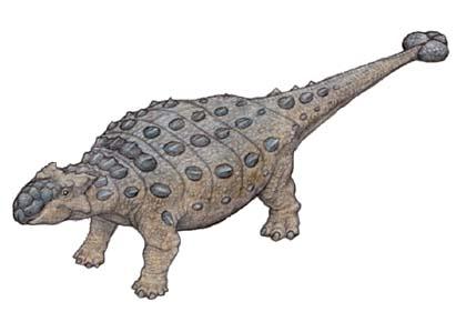 アンキロサウルスの画像 p1_22