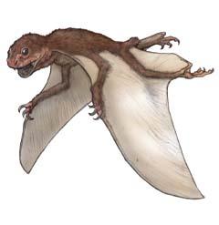 ジェホロプテルス(Jeholopterus ningchengensis ) 恐竜のデジタル図鑑