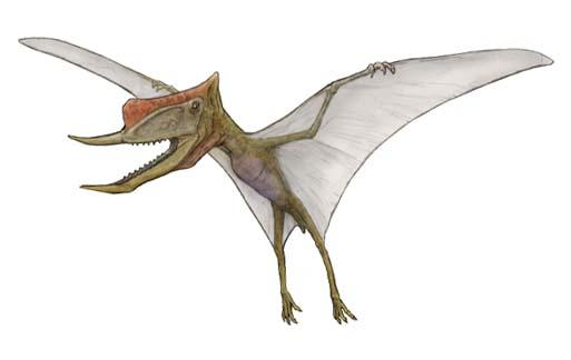 恐竜のデジタル図鑑