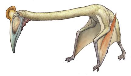 ハツェゴプテリクス(Hatzegopteryx thambema ) 恐竜のデジタル図鑑